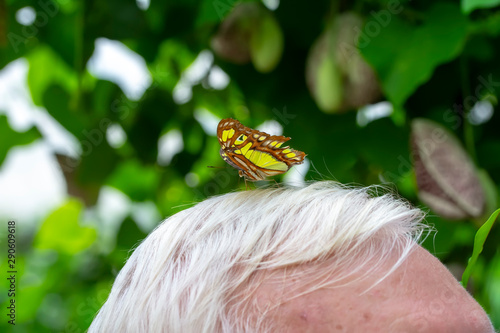 Photo Stands Butterfly Closeup beautiful butterfly sitting on the head