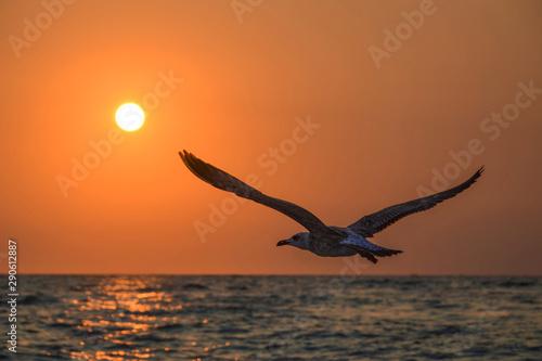 Photo sur Aluminium Orange eclat flying bird seagull in the sky sea sunset