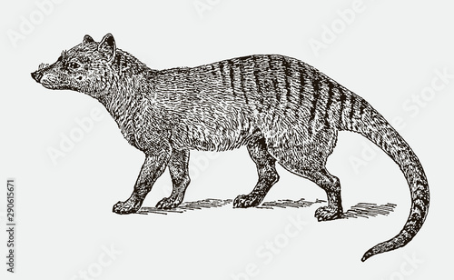 Obraz na plátně  Extinct thylacine or tasmanian wolf (thylacinus cynocephalus) in side view
