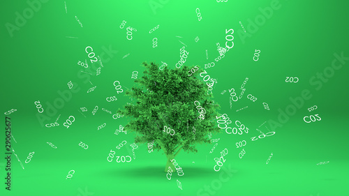 Photo Tree absorbs co2 or Tree absorb carbon dioxide