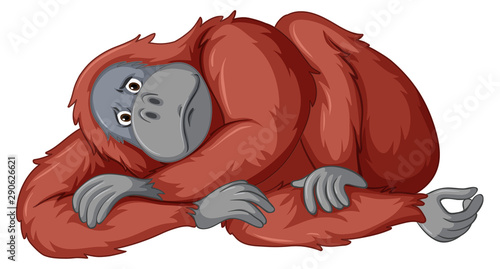 Canvas Prints Kids Sad chimpanzee on white background