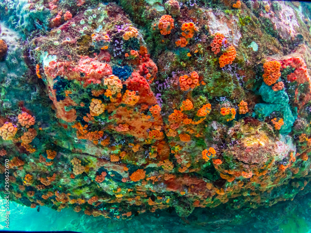 Coral reef with school of colorful tropical fish under the sea at Samaesan city, Thaialnd