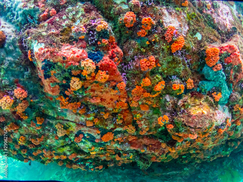 Fototapety, obrazy: Coral reef with school of colorful tropical fish under the sea at Samaesan city, Thaialnd