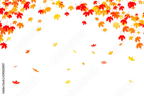 Multi colored autumn leaves background - 290628007