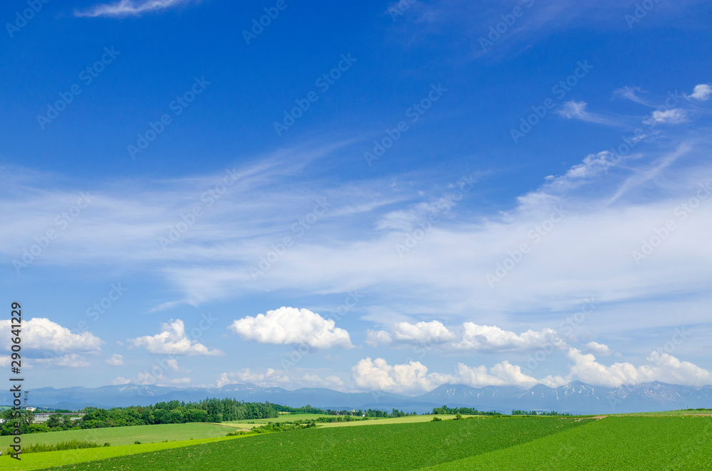 Fototapeta 北海道 美瑛 青空と穀倉地帯