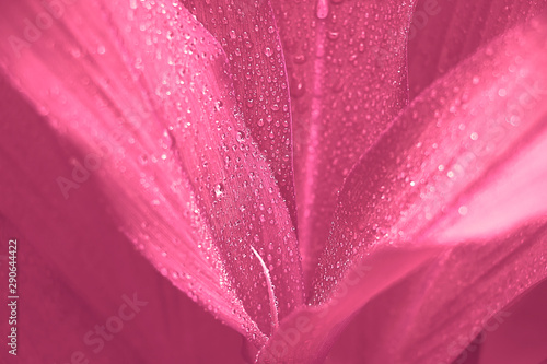 Foto auf Leinwand Rosa Lovey Closeup nature view of beautiful leaf on blurred greenery background with copy space using as background natural green plants landscape, fresh wallpaper concept