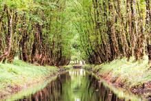River In Jungle In Costa Rica