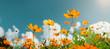 Leinwandbild Motiv yellow flower cosmos bloom with sunshine and blue sky background