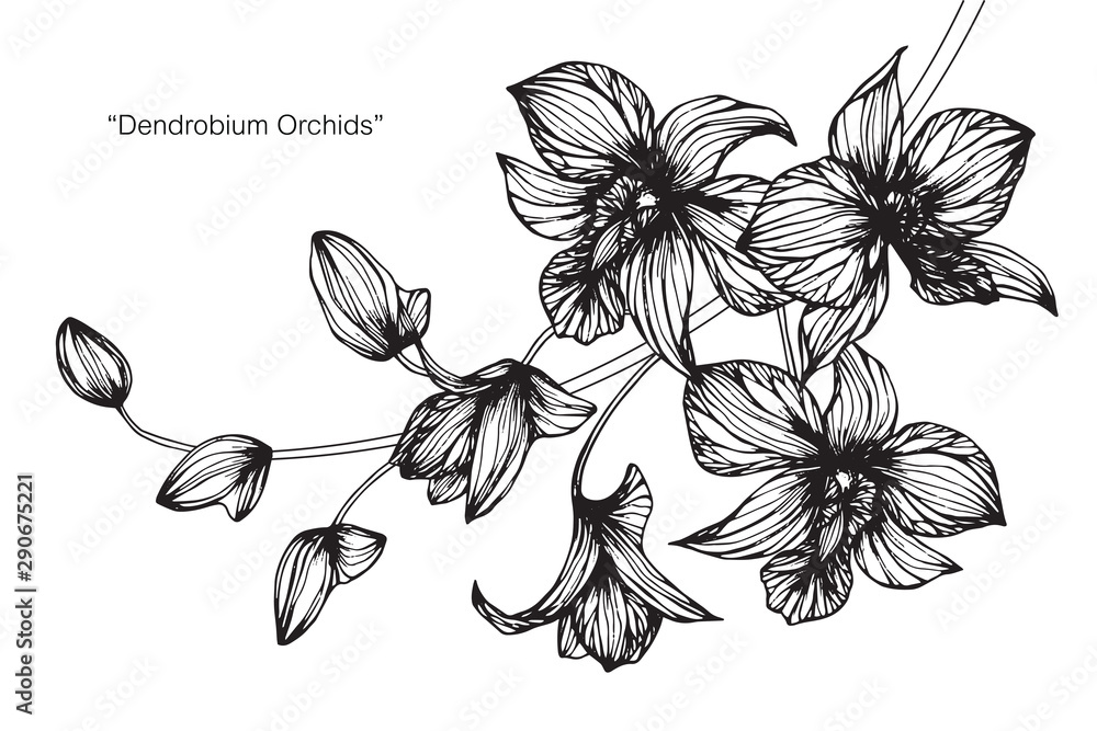 Fototapety, obrazy: Orchid flower and leaf drawing illustration with line art on white backgrounds.