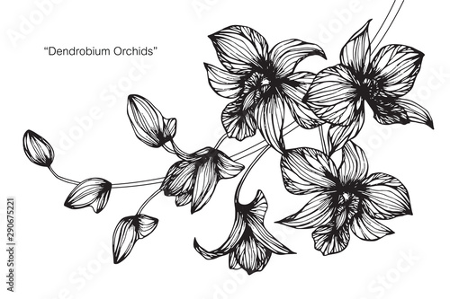 Orchid flower and leaf drawing illustration with line art on white backgrounds. - 290675221