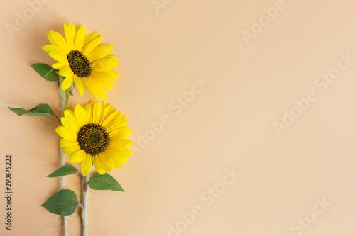 Cadres-photo bureau Tournesol Two beautiful decorative yellow sunflowers on orange pastel background.