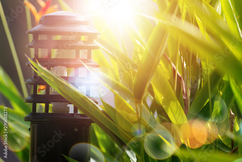 Foto auf AluDibond Honig Beautiful sunrise in the park..Garden light and backyard landscape refreshment with sunray and golden bokeh.