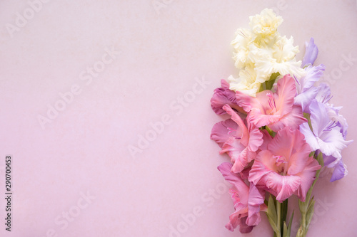 Colorful gladioli on a pink background Fototapet