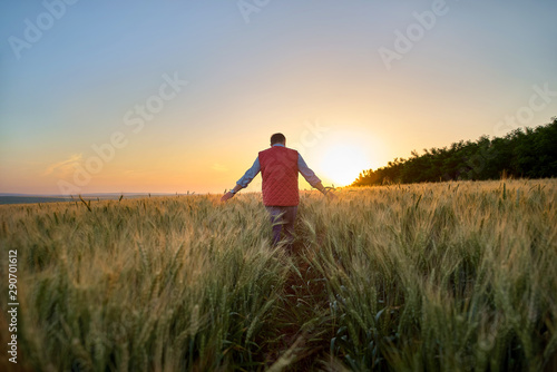 Wall Murals Pale violet Male hand moving over wheat growing on the field. Field of ripe grain and man's hand touching wheat in summer field. Man walking through wheat field, touching wheat spikes at sunset