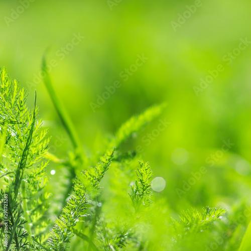Fotografía Blurred background grass close up with dew