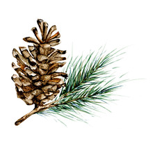 Merry Christmas Card Design. Watercolor Spruce Branch, Fir Cone Illustration. Isolated On White Background. Hand Drawing.