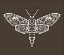 Sphingidae Hawk-moths Graphic
