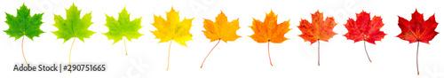 Photo bunte Ahornblätter liegen auf weißem Hintergrund, Vorderseite, Freisteller