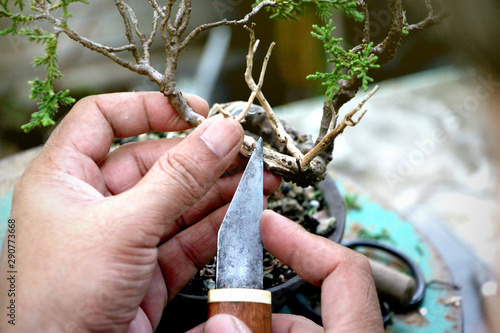 Making Bonsai Trees Peeling Bark A Japanese Knife Handmade Accessories Of Bonsai Tools Bonsai Tree Concept Buy This Stock Photo And Explore Similar Images At Adobe Stock Adobe Stock