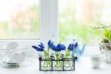 The Kitchen Windowsill With Muscari Flowers In Bottles