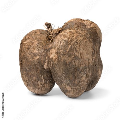 Valokuva Single fFresh raw brown yam