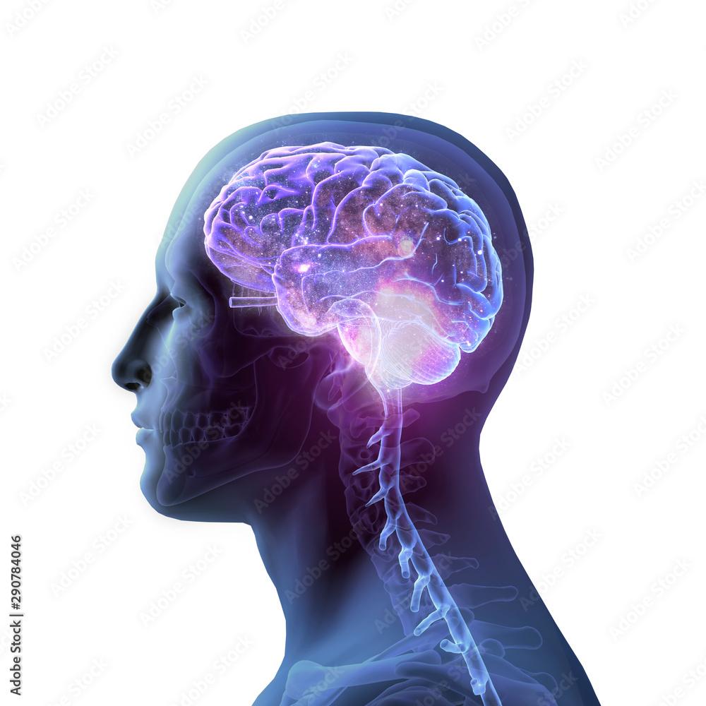 Fototapeta 3D Rendering of Star-filled Brain and Skull on White