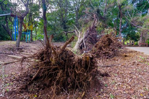 Photo 台風の被害で倒れた大木