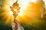 Autumn background with leaf held in woman's hand and with beautiful gold sunlight. Heart cut in leaf. - 290791471