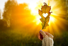 Autumn Background With Leaf Held In Woman's Hand And With Beautiful Gold Sunlight. Heart Cut In Leaf.