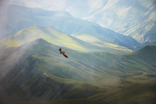 Mountain Caucasian Eagle Flies In The Sky Against The Backdrop Of Rocky Mountains And Plateaus. The Concept Of Coast And Freedom Of Choice
