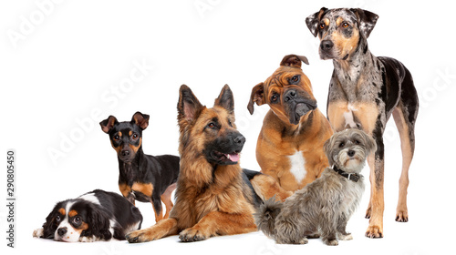 Foto Group of six dogs