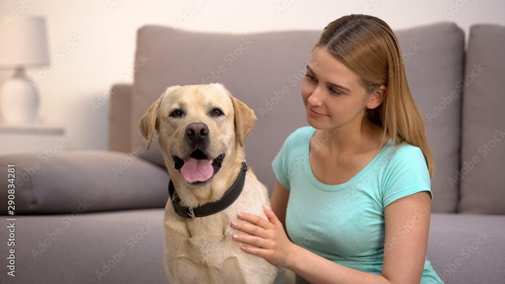 Fototapety, obrazy: Female dog owner admiring labrador retriever at home animal and human friendship