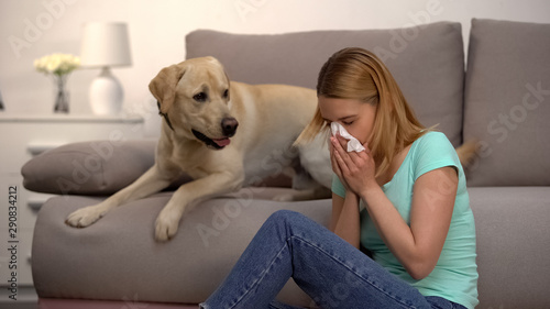 Photo Woman sitting near labrador dog sneezing in tissue, fur allergy, antihistamine