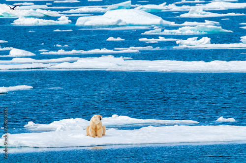 Large polar bear lying on a large ice pack in the Arctic Circle, Nordaustlandet, Svalbard, Norway