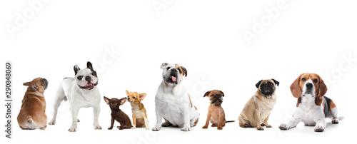 Obraz Yorkshire terrier isolated on white. Happy dog - fototapety do salonu
