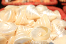 Beautiful Sea Shells In Basket, Closeup View