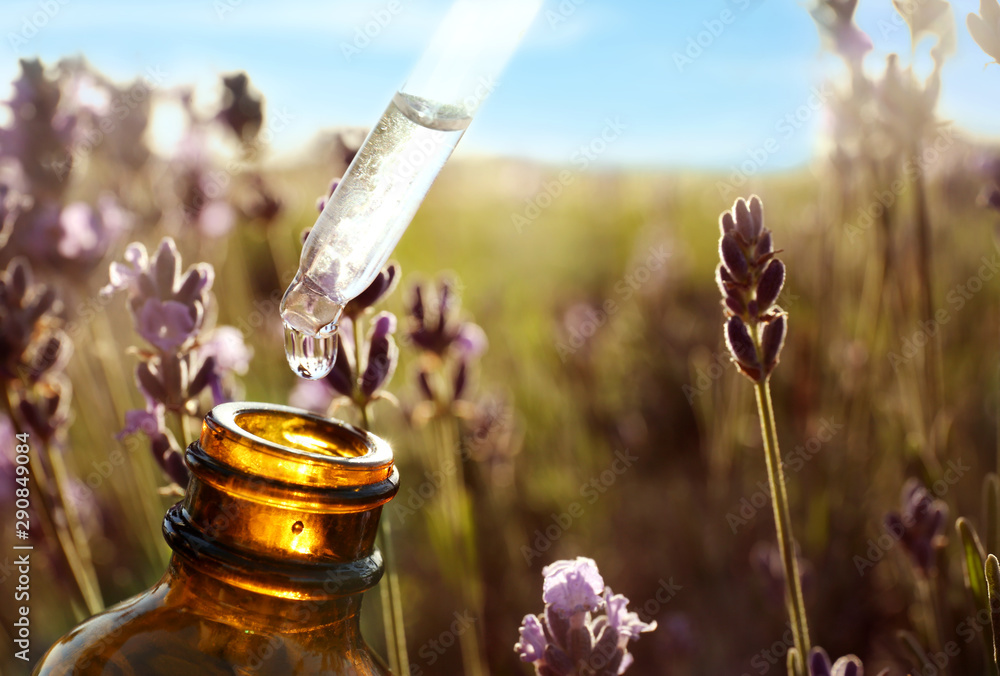 Fototapeta Dropper with lavender essential oil over bottle in blooming field, closeup. Space for text