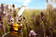 Dropper with lavender essential oil over bottle in blooming field, closeup. Space for text