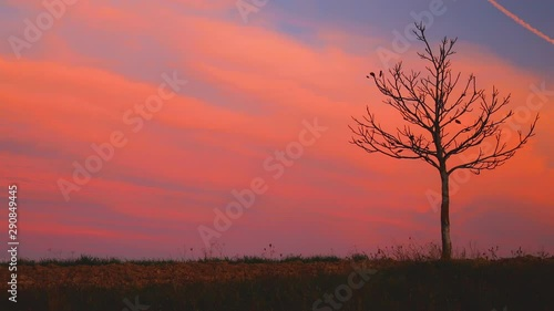 Fotografie, Obraz  Lonely autumn tree in a field, silhouette on sunset, nature background