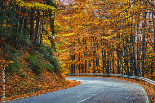 Wall Murals Autumn Asphalt road through vibrant forest