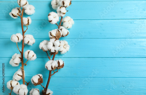 Fotografiet  Flat lay composition with branches of cotton plant on light blue wooden background