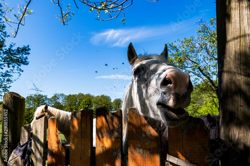 Foto op Canvas Paarden horse looks over the fence