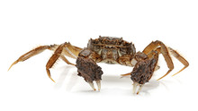 River Crab - A Kind Of Chinese...