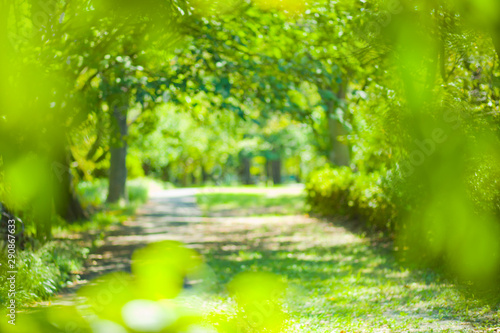 fototapeta na ścianę green park blur bokeh background