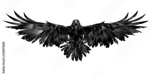 Obraz na plátně drawn flying raven on a white background