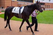 日本の競馬①  Japanese Horse Racing①