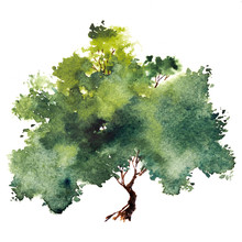 Green Tree With Leaves. Hand D...