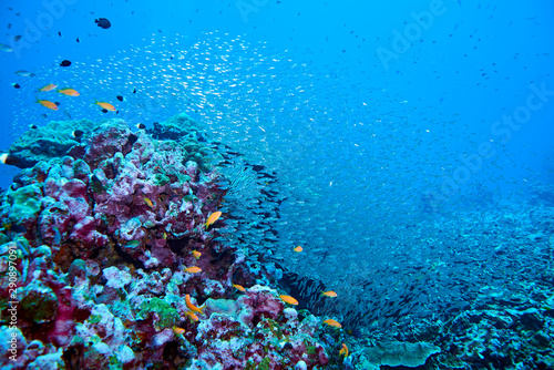 Stickers pour portes Recifs coralliens Fish on underwater coral reef