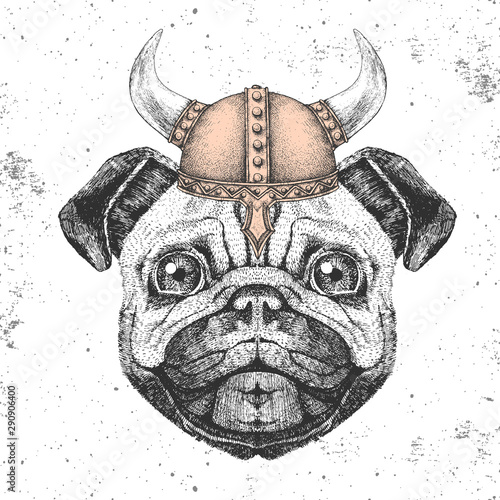 Foto  Hipster animal pug-dog wearing a viking helmet