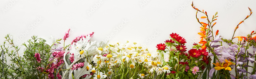 Fototapety, obrazy: panoramic shot of bunches of diverse wildflowers on white background with copy space